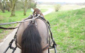 Paardenkont - Karl Raats