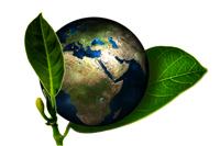 Green World (2)